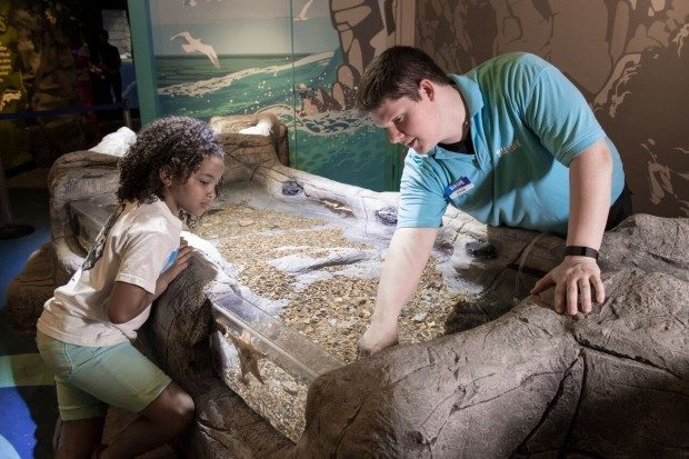 SEA LIFE Grapevine Aquarium's New Rain Forest Adventure!