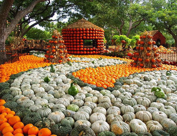 Dallas Arboretum's Pumpkin Village Opens September 19!