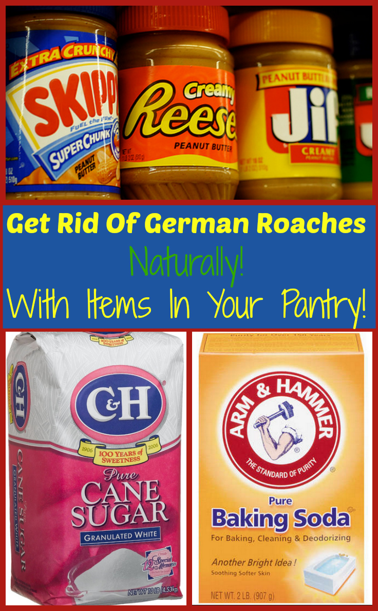 Get Rid Of German Roaches Naturally