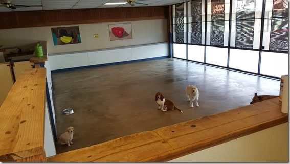 Wag Time Doggy Day Care In Arlington TX!