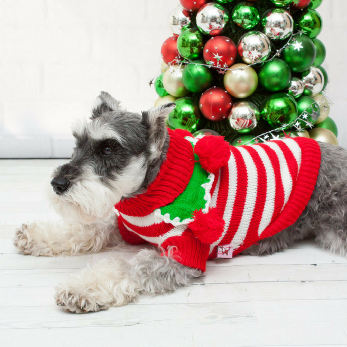 Holiday Pet Sweaters Just $9.99! Down From $33!