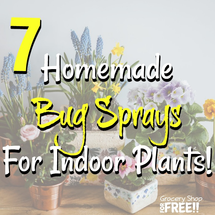 These 7 Homemade Bug Sprays For Indoor Plants should cover pretty much any pest your houseplants encounter.  Plus, they can be made with things you probably already have, and they are a more natural alternative to store bought pesticides.