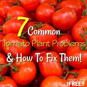 7 Tomato Plant Problems And How To Fix Them!