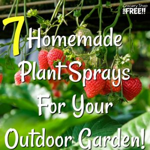 7 Homemade Plant Sprays For Your Outdoor Garden!