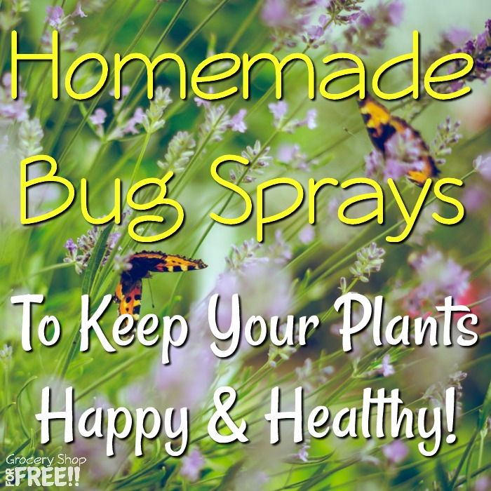 "It's important to keep your indoor and outdoor plants healthy because they keep us healthy.  They feed us and clean our air among other things.  Check out these homemade plant sprays to help keep them ""bad"" bug free!"