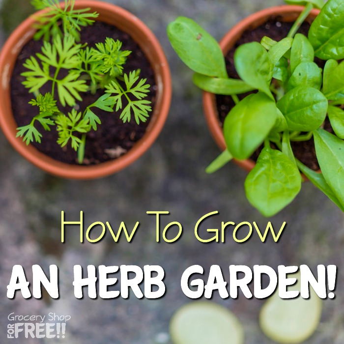 How To Grow An Herb Garden!  Growing Fresh Herbs For Your Family Is Simple & Healthy!