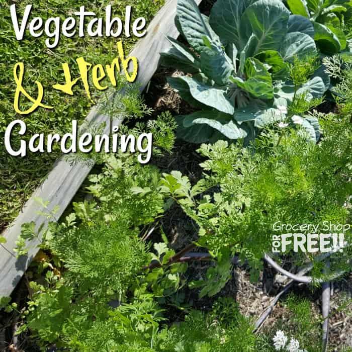 Vegetable & Herb Gardening