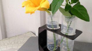 DIY Test Tube Vase