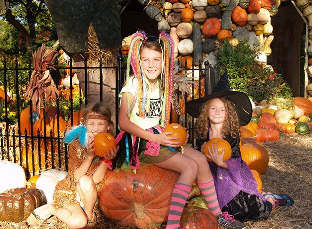 Dallas Arboretum Family Fun Weekend!  Special Discount, Activities For The Whole Family!