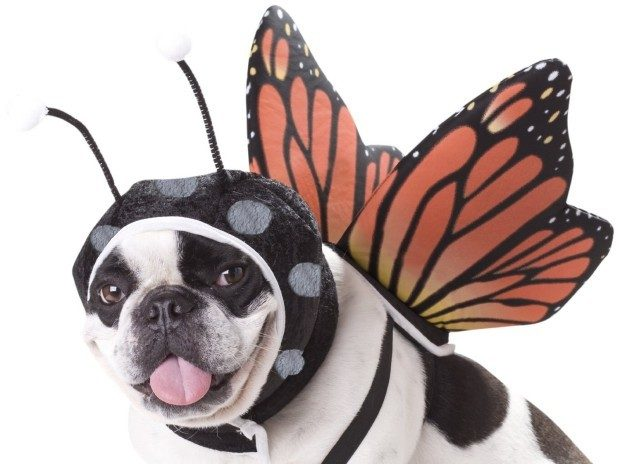 Animal Planet Butterfly Dog Costume Just $3.91!