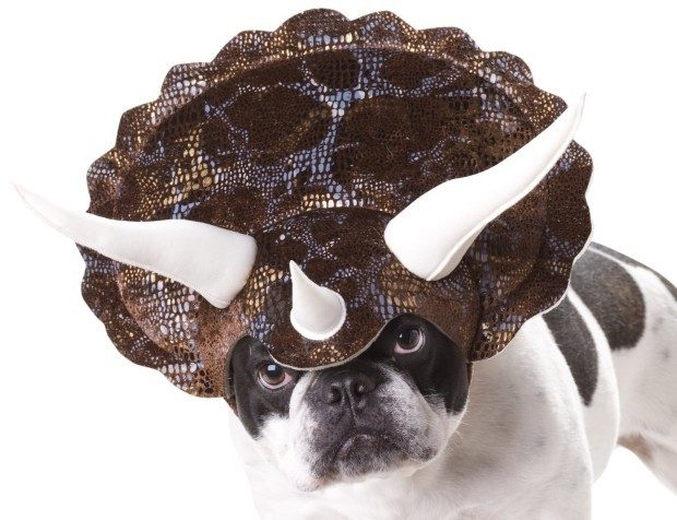 Animal Planet Triceratops Dog Costume $7.99! (Reg. $12.99!)