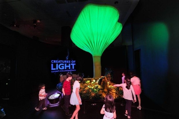 Perot Museum Of Nature & Science Dallas Presents:  Creatures of Light: Nature's Bioluminescence!